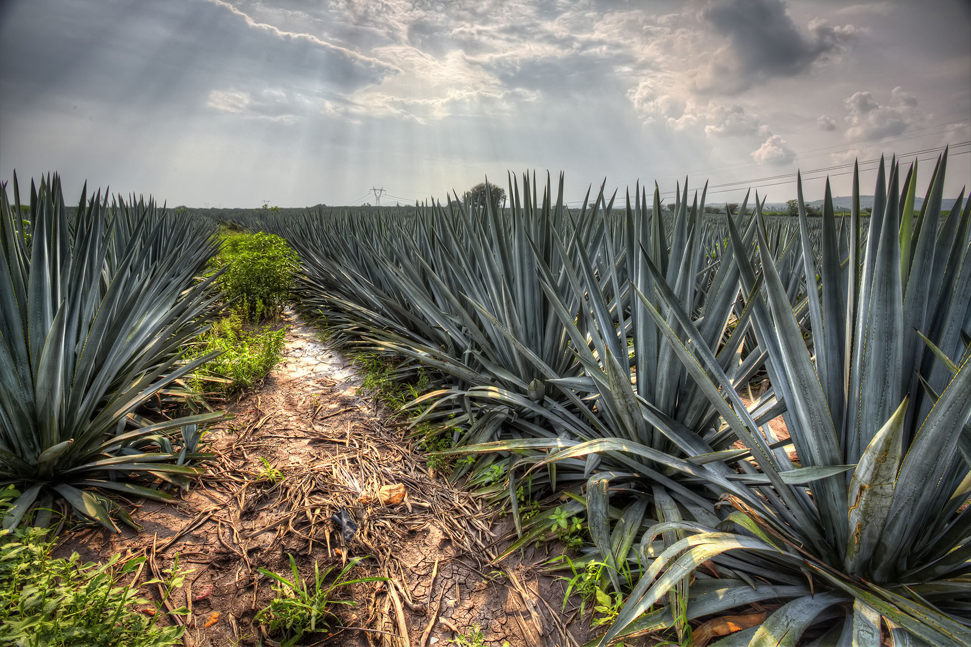 From $26 To $225, 10 Reposado Tequilas For Every Budget photo