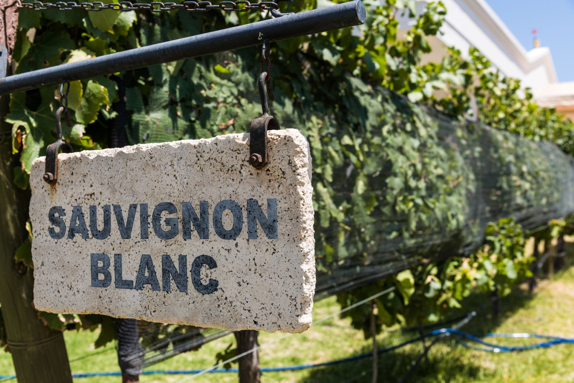 Grassy, Herbaceous And More: Sauvignon Blanc From Around The (new) World photo