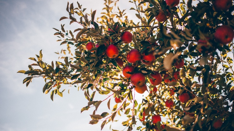 Ripe For Reopening: Which Cider Trends Will Help Operators Pick A Winning Summer Offer? photo