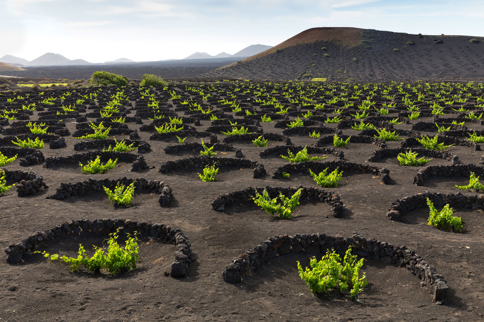 The Strange Volcanic Vineyards Of The Canary Islands Will Blow Your Mind photo