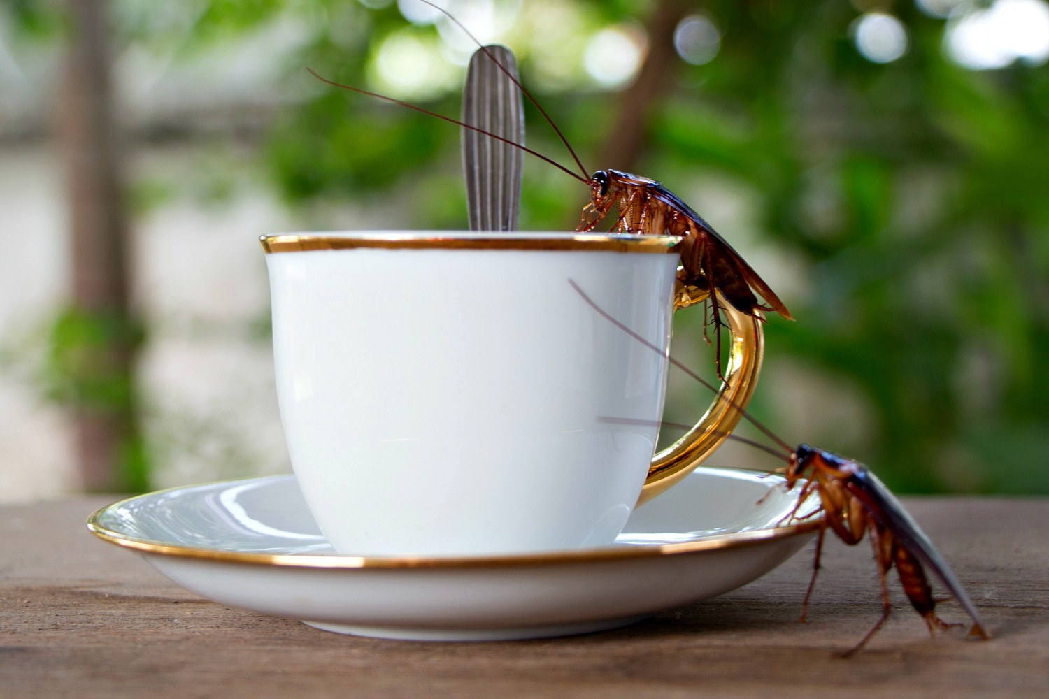 Coffee Drinkers Are Also Drinking Cockroaches, Doctor Says photo