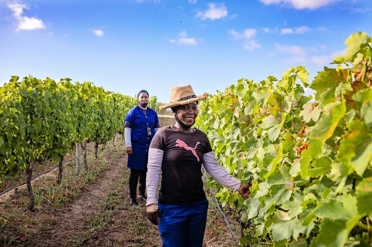 'late But Great': Six Cape Wine Fundis Give Their Verdict On The 2021 Harvest photo