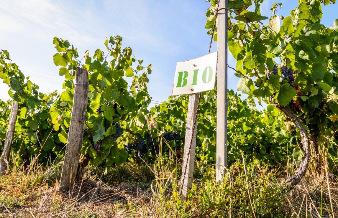 Top Organic Wines photo