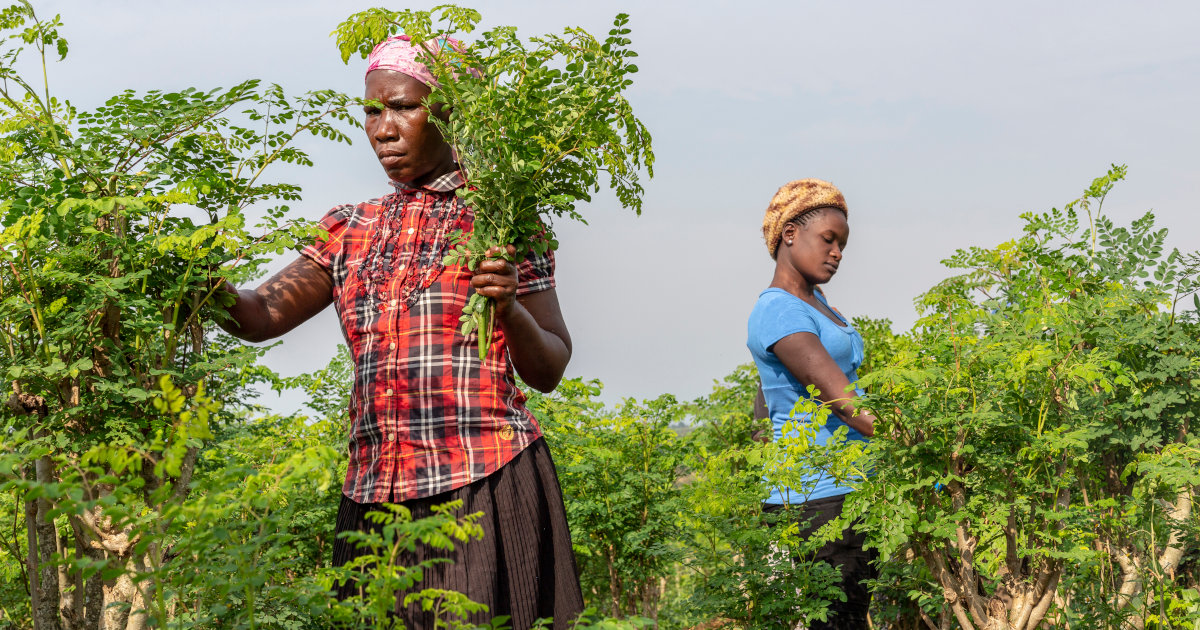 13 Companies Tapping Into The Health And Wellness Trend In Africa And Beyond photo