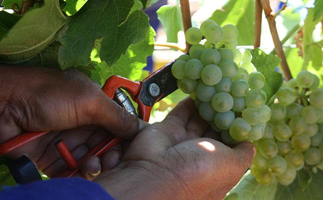 Bearish Outlook For Wine Sa Season Continues photo