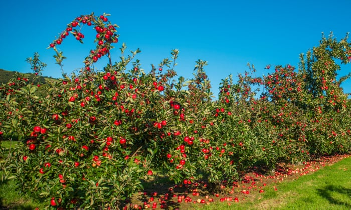 From Katy Apples To The Broxwood Foxwhelp – A Year In The Life Of A Cider Orchard photo
