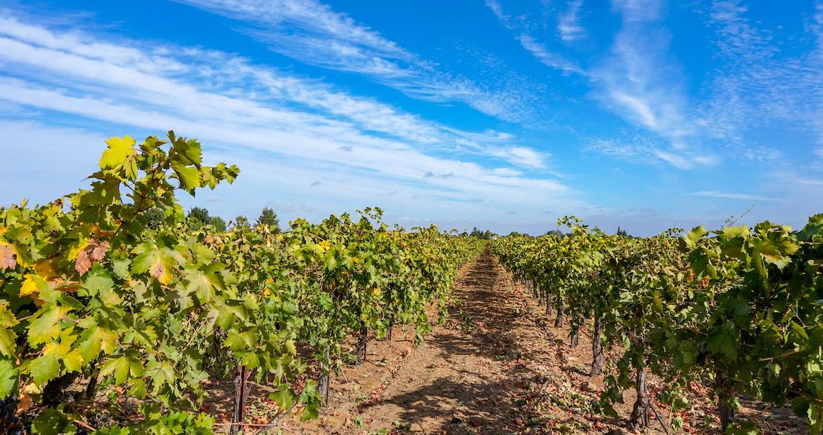 Best Lesser-known Wine Regions In California photo