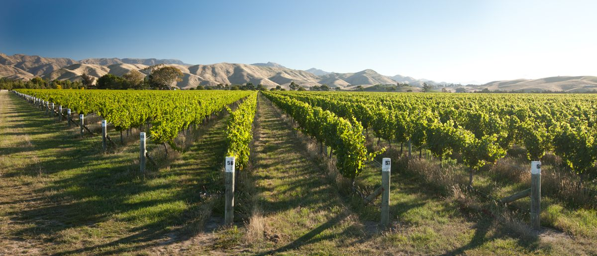 Eight Great New Zealand Sauvignon Blancs To Try (plus One From Chile) photo