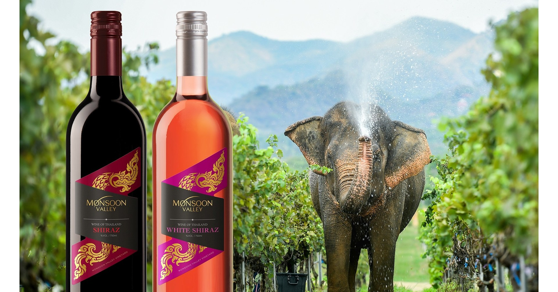 Celebrating Exceptional 2021 Harvest For Monsoon Valley Vineyard In Thailand photo
