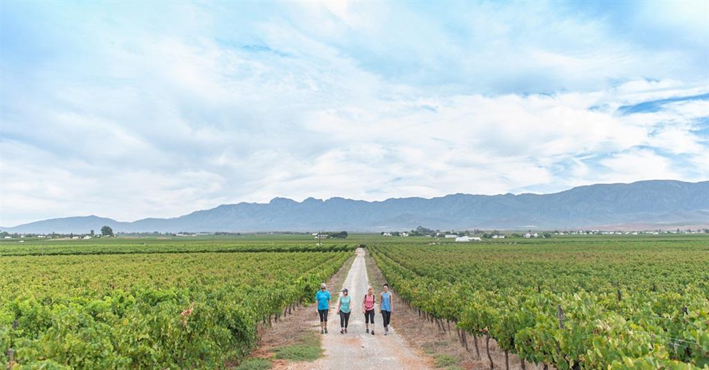 Three-day Wine Walk… Amidst Robertson's Vineyards photo