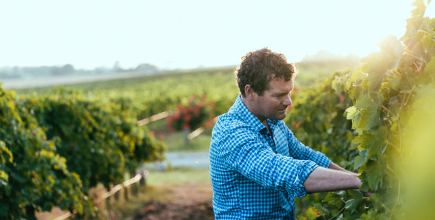 Angove Family Takes Gold In Organic Wine Awards photo
