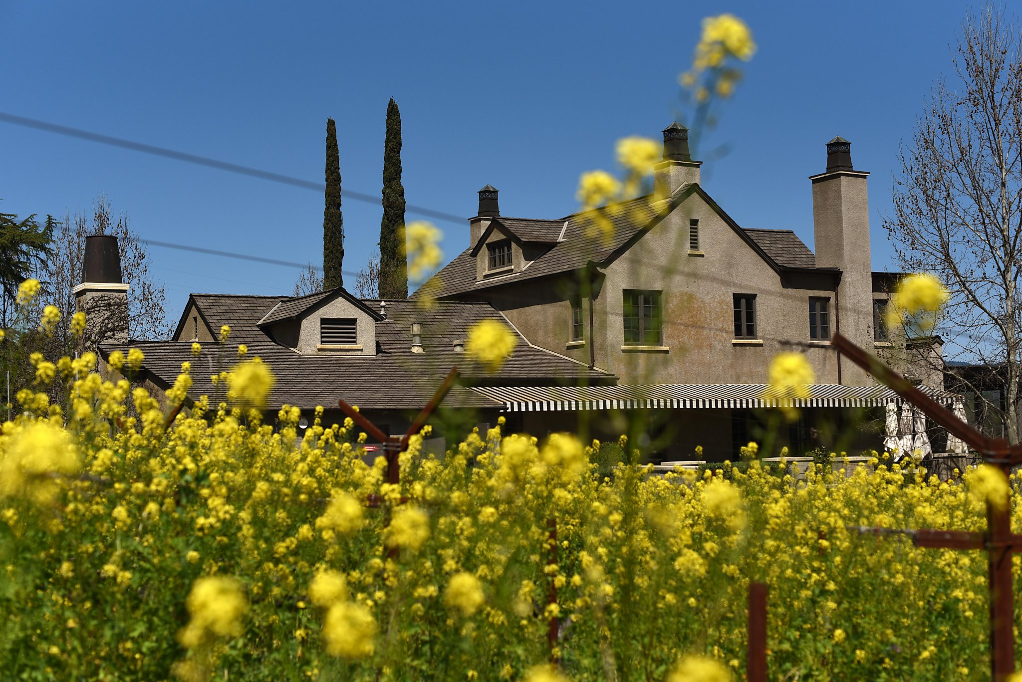 Napa's Prestigious Staglin Winery Says It Needs More Visitors To Succeed. Its Wealthy Neighbors Are Fighting Back photo