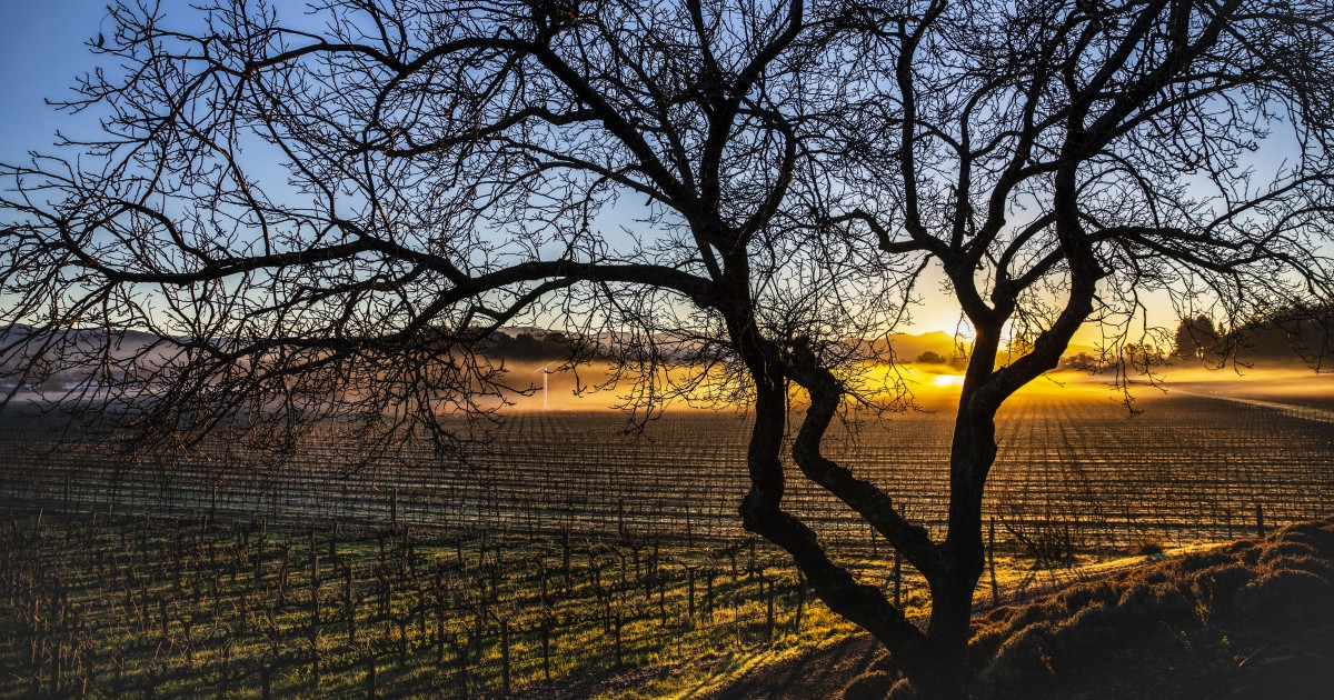 Wine Tasting In Napa And Sonoma Will Never Be The Same. Here's Why That's A Good Thing photo