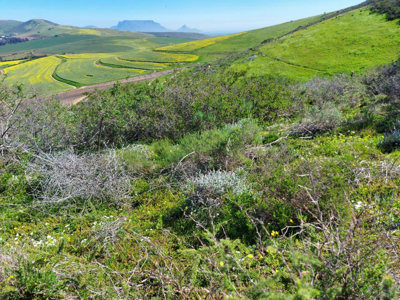 Diemersdal Wine Estate Becomes WWF Conservation Champion for Preserving Endangered Ecosystem photo