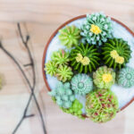 Creating Cupcakes That Look Like Summer Succulents photo